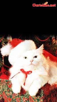 Sfondi hd di natale per cellulare gratis hd christmas for Sfondi cellulare full hd