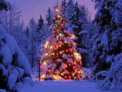 Foto Con La Neve Di Natale.L Albero Di Natale Cartoline Net