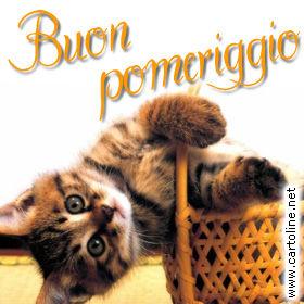 Buon pomeriggio con gatto for Buongiorno con gattini
