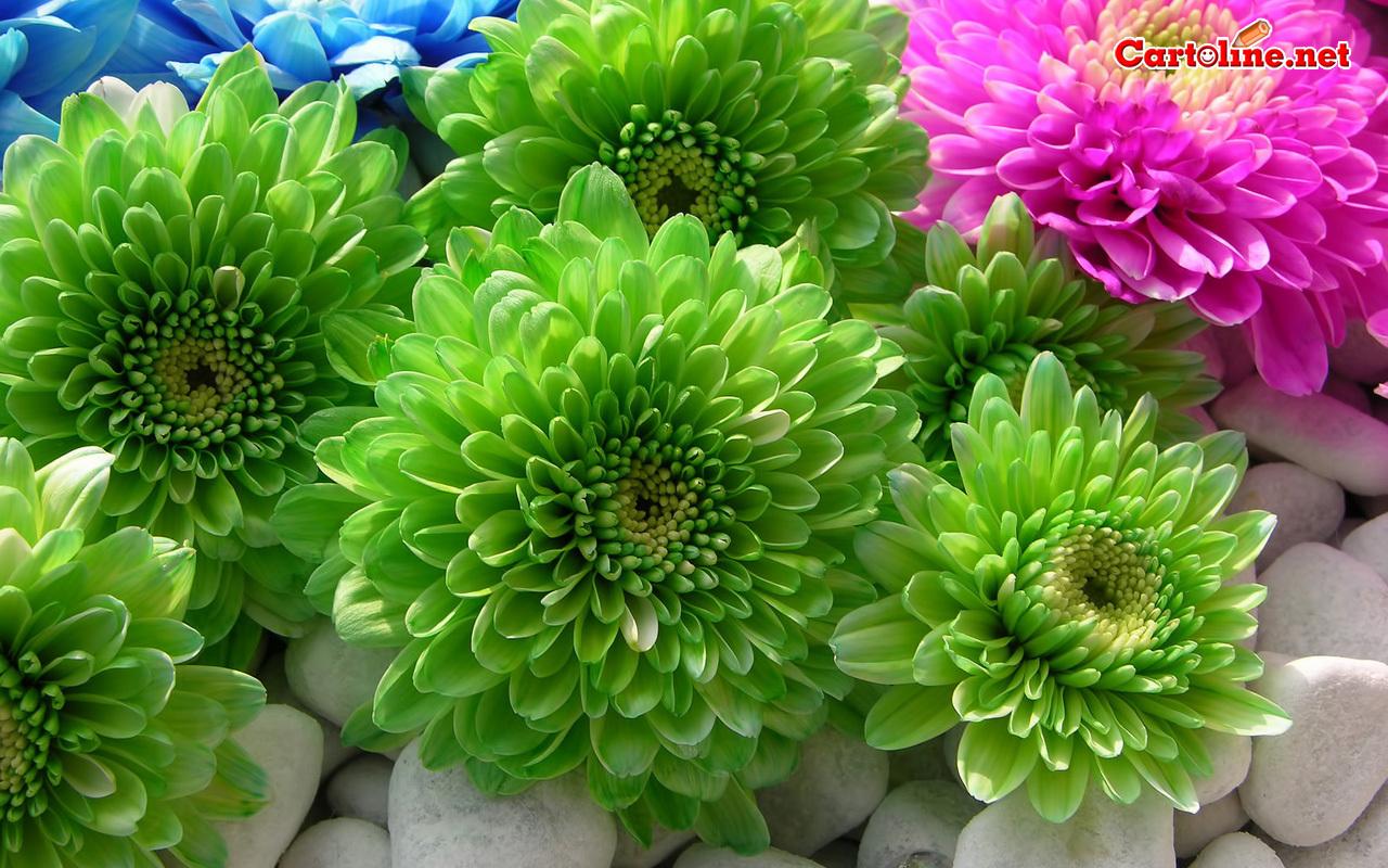 Sfondo personalizzato for Fiori verdi