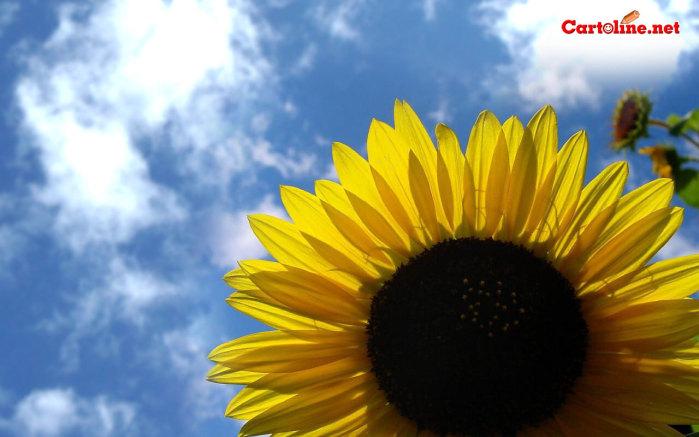 Il blog di susanna sfondi desktop di primavera for Immagini desktop primavera