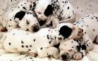 Sfondi di Cani