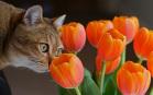 Sfondi di Gatti